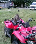 cat on ATV