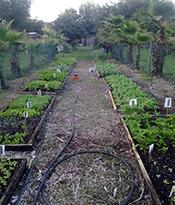 garden in central florida